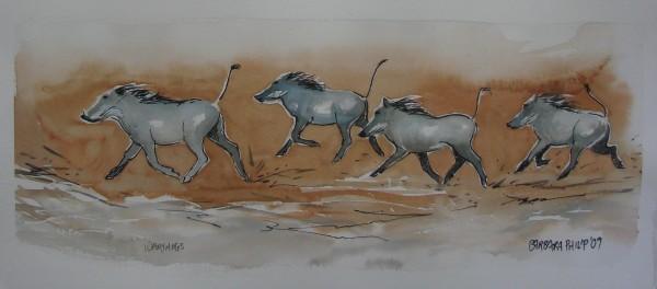 Warthogs running, sketch