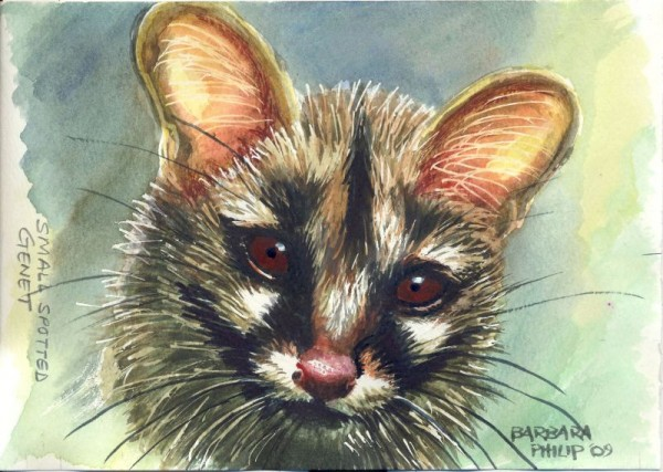 Small-Spotted Genet. painting