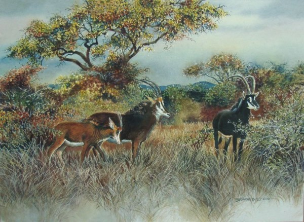 Sable Antelope painting