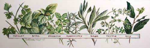 Herbs painting