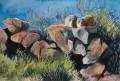 Dassies painting