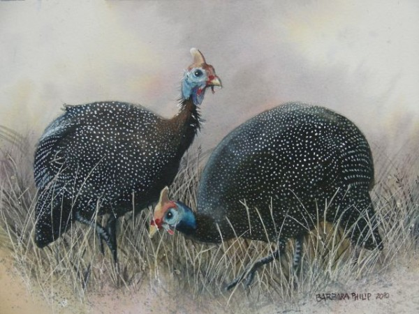 Painting of Guinea Fowl