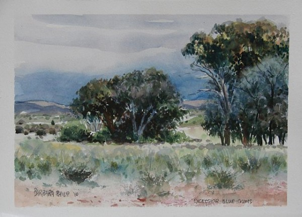 Painting of Blue Gum trees