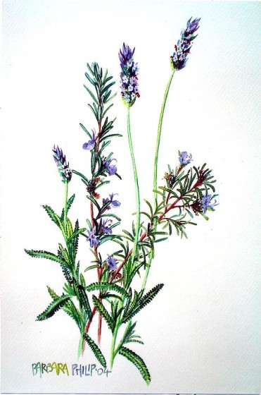 Painting of Lavender and Rosemary
