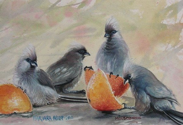 Painting of Mousebirds with Oranges.