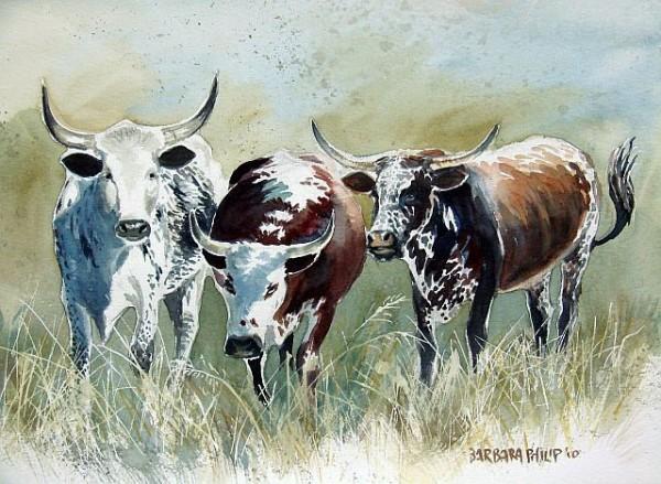 Nguni cattle study. watercolour