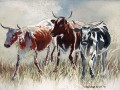 Nguni cattle, watercolour