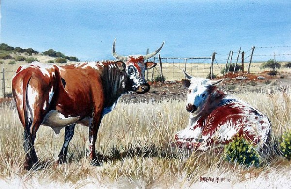 two Nguni cattle. watercolour