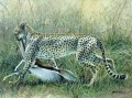 Serengeti cheetah & kill