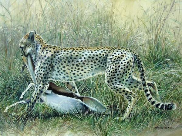Serengeti cheetah & kill