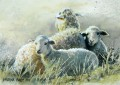Sheep. 'Ewe with twins, cold winter morning'.