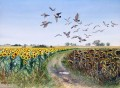 Rock Pigeons over the Sunflower Fields