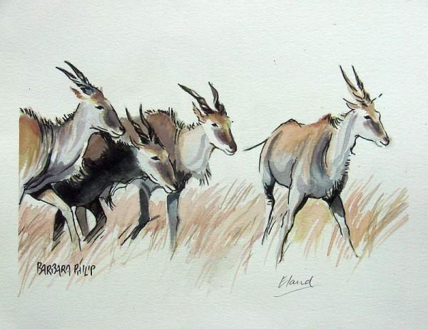 Four Eland. Pen & wash sketch.