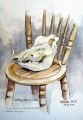 Warthog skull on a chair
