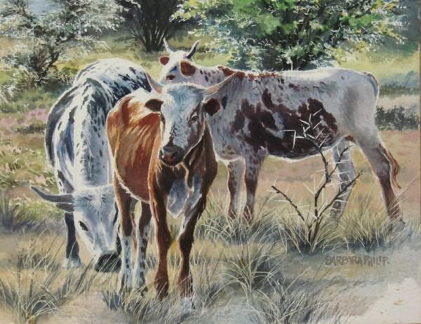 3 Nguni cattle and thorn trees