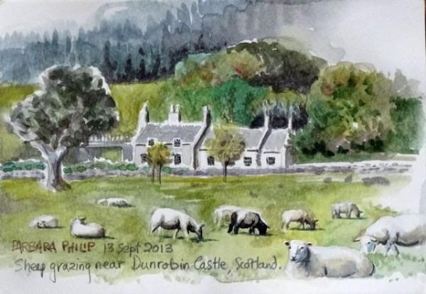 Field of sheep, Dunrobin