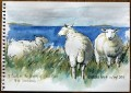3 Ewes beside Loch Ewe