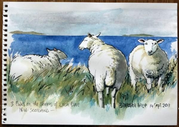 3 Ewes beside Loch Ewe
