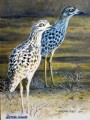 The Spotted Dikkop