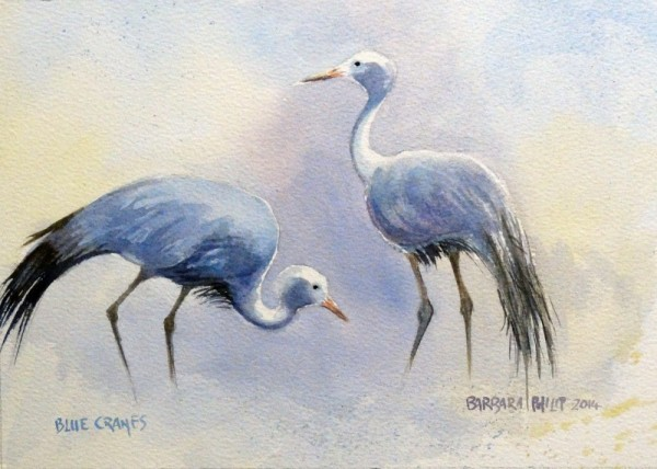 Pair of Blue Cranes