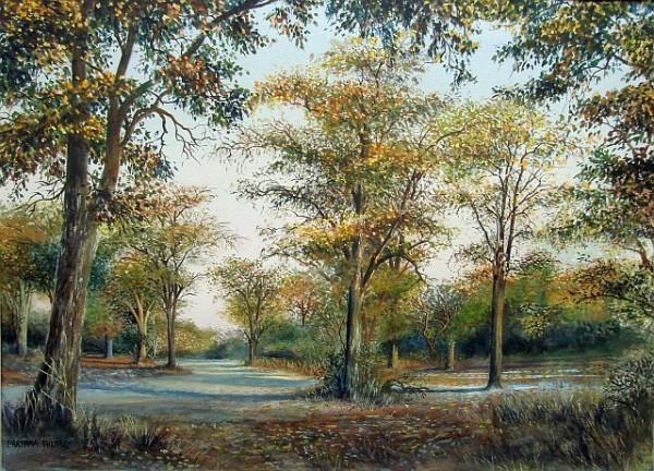 Mopane trees