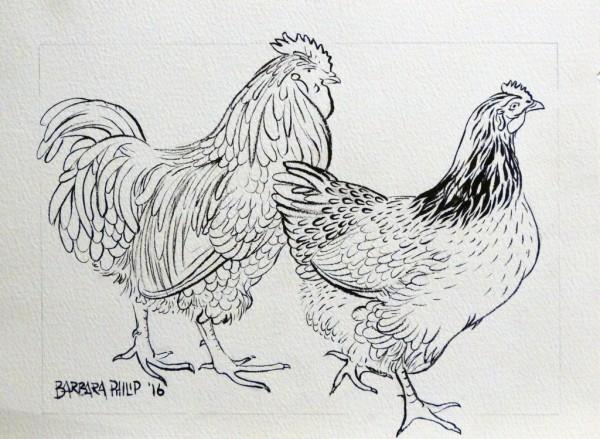 Colour-in yourself, farm fowls.