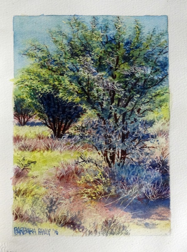 Thorn tree, acacia karoo.