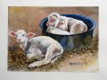 Orphaned Lambs.