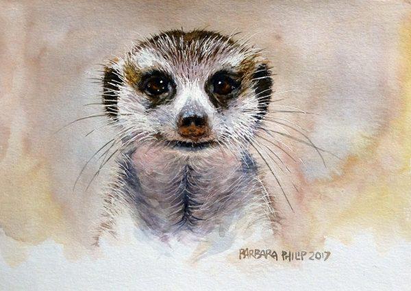 Meercat, wildlife portrait.