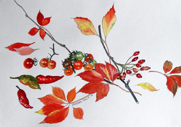 The Reds of autumn in my garden.