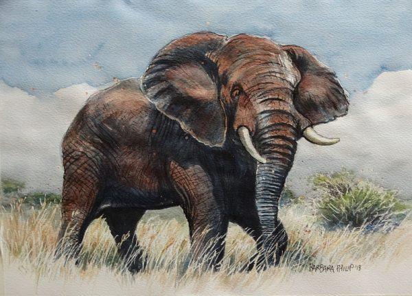 Elephant bull.