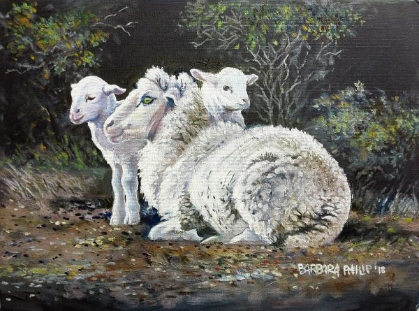 Sheep with twins.
