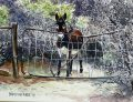 karoo donkey at the gate