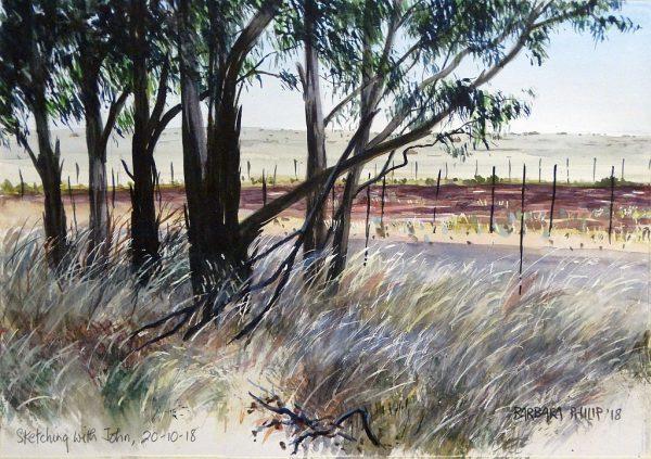 Eucalyptus trees in the grass