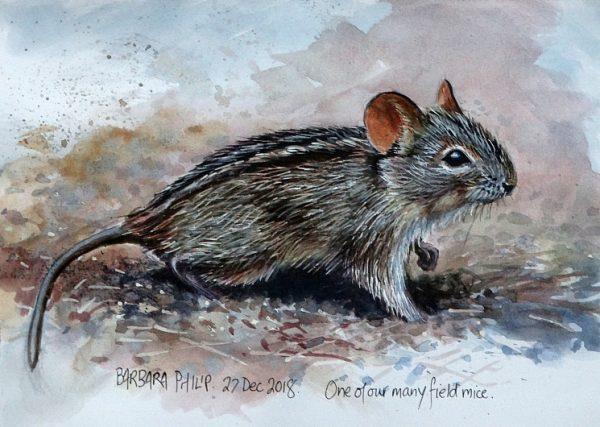 Little field mouse