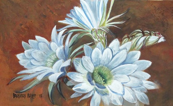 White flowering cactus, Silvermere